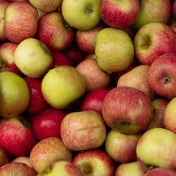 Gravensteiner Äpfel